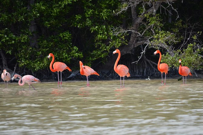 Celestun Biosphere Reserve Tour from Merida