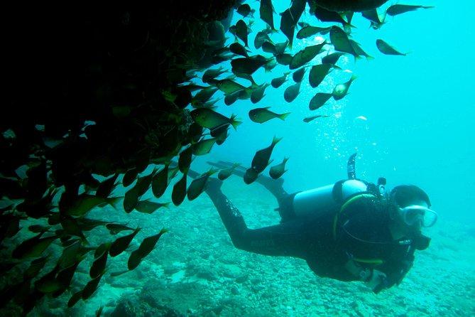 Scuba Dive Ningaloo Reef
