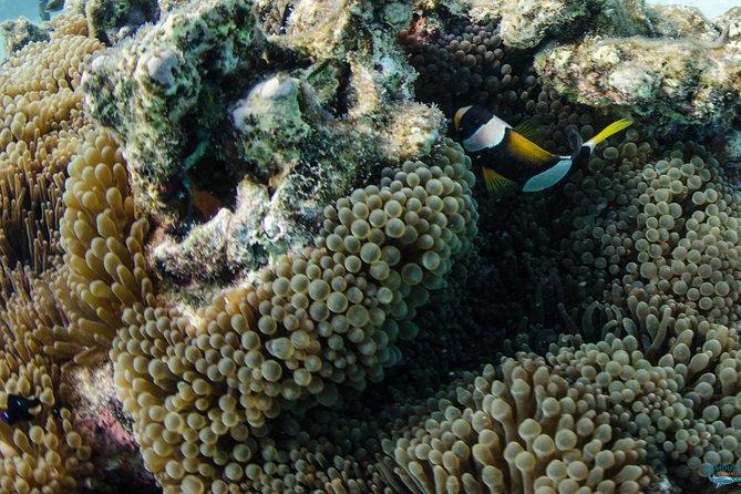 Muiron Island Dive & Snorkel Tour