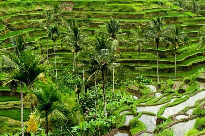 Full Day Exploring UBUD and Rice Terrace