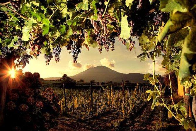 Degustación de vinos en las laderas del Monte Vesubio desde Nápoles