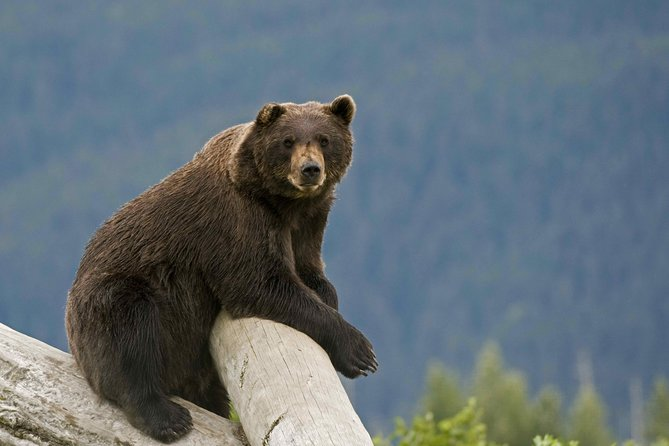 Turnagain Arm and Alaska Wildlife Tour from Anchorage