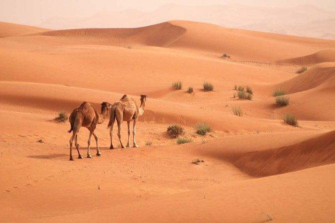 Morning Camel Trekking Safari from Dubai