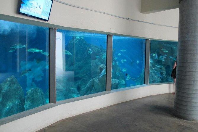 Paranagua Aquarium Admission Ticket