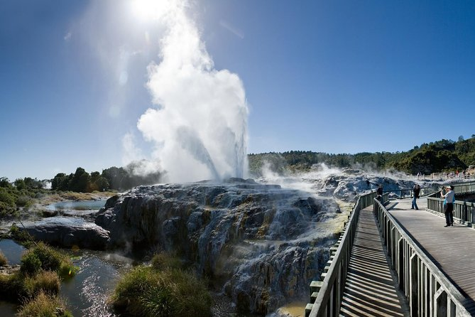 Rotorua Highlights with Te Puia - Tauranga Shore Excursion