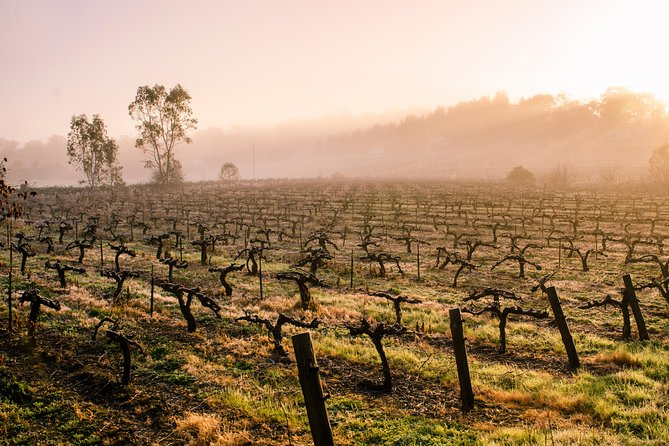 Barossa Valley by Private Tour your way!