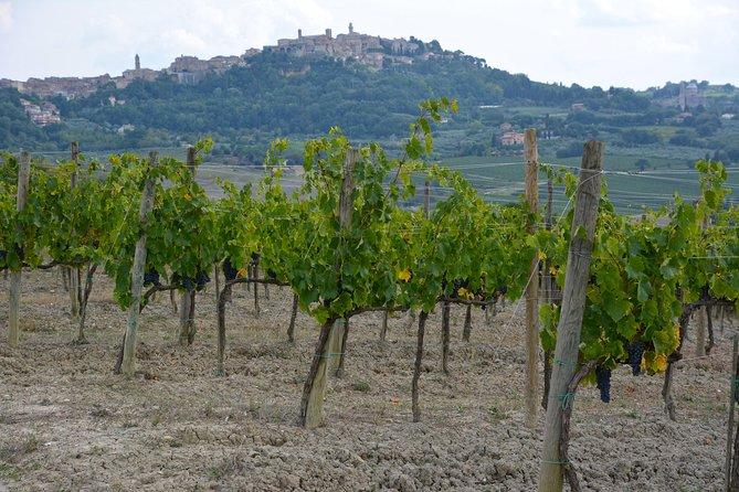 Montepulciano Weintour - mittwochs von SIENA