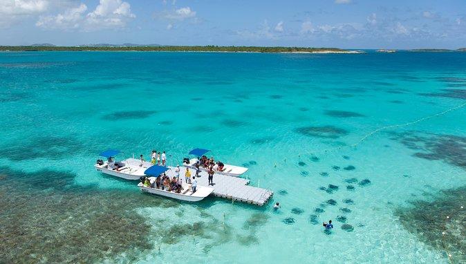 Southern Stingray Marine Animal Interaction and Snorkel