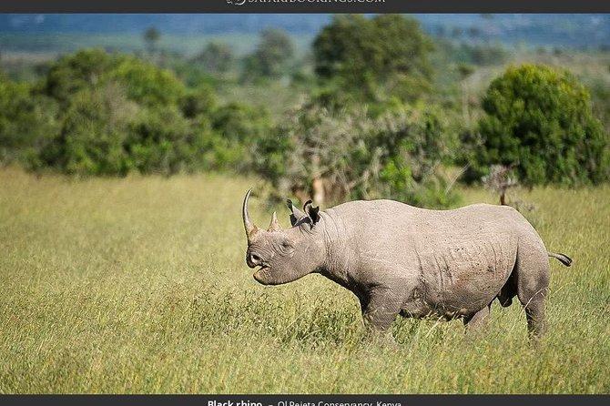 Ol Pejeta Conservancy Day Tour from Nairobi