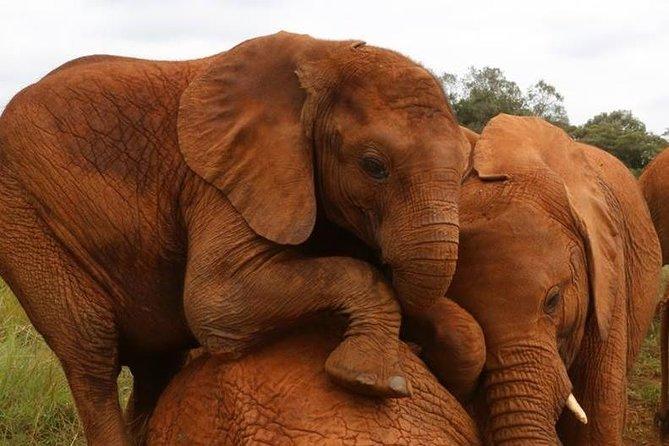 Day Tour to David Sheldrick Elephant Trust and Giraffe Center