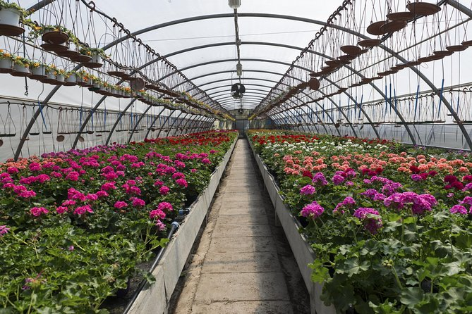 Santa Elena Day Trip: Silleteros and Flower Farm Cultural Tour
