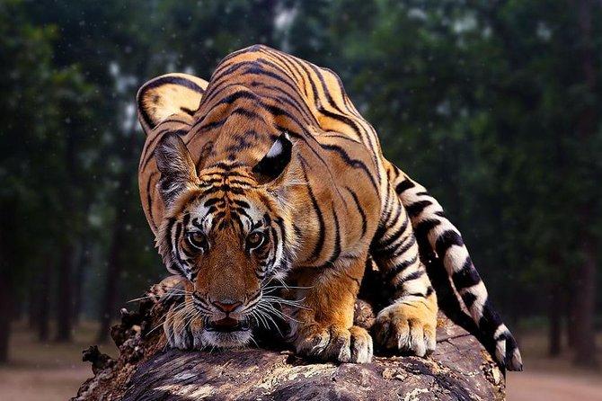 6N & 7D Incredible Madhya Pradesh Experience - Jabalpur, Kanha & Bandhavgarh