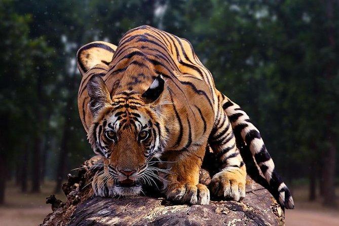 6N & 7D Incredible Madhya Pradesh Experience - Pench, Kanha & Bandhavgarh