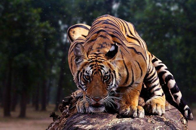 2N & 3D Incredible Madhya Pradesh Experience - Bandhavgarh National Park Ex Jabalpur