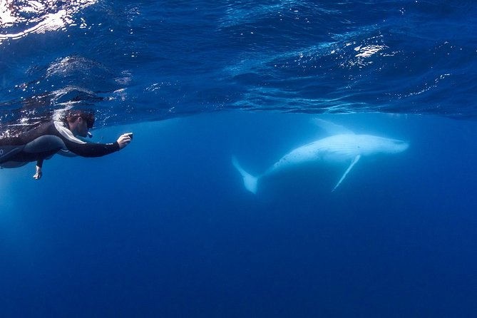 Whale Watching and Swim with Whales Cruise from Mooloolaba