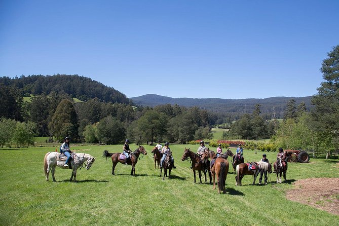Yarra Valley 1 Hour Horse Trail Ride