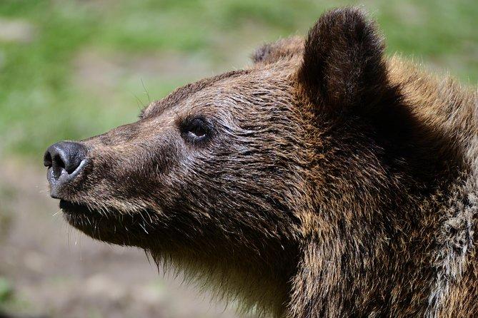 Brown Bear Rehabilitation Center