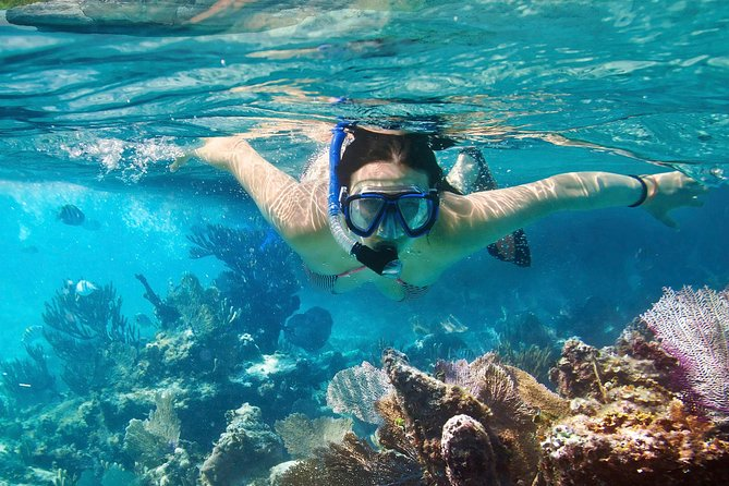 Cozumel Snorkeling Tour: Palancar, Columbia and Cielo Reefs