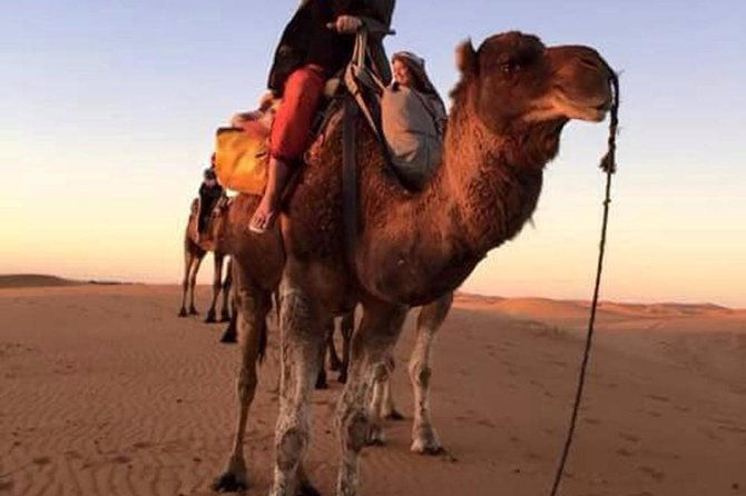 Camel riding in the palm groves of Marrakech & palmeraie