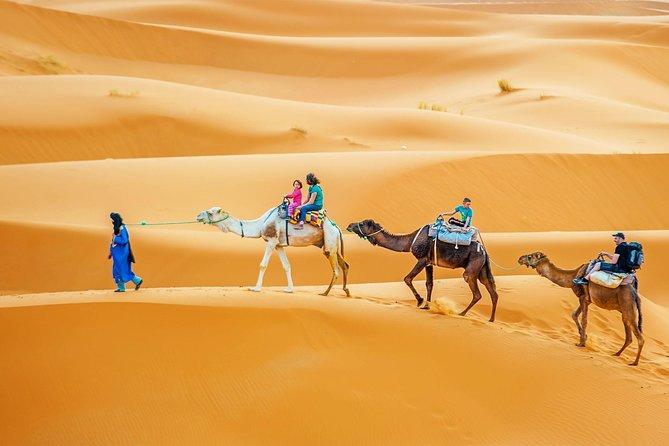 Full-Day Camel Trek in Douz