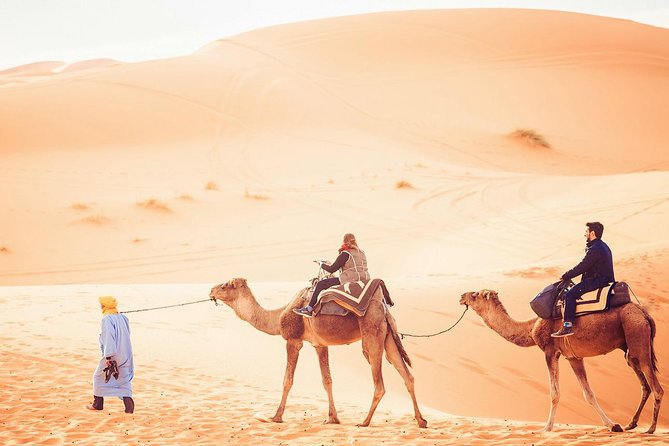 2-Day Tunisia Sahara Desert Camel Trek from Douz