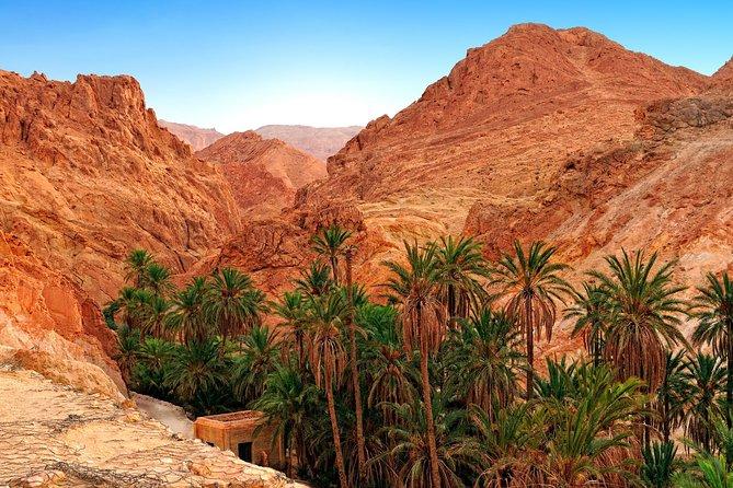 Visit Tamerza Oasis
