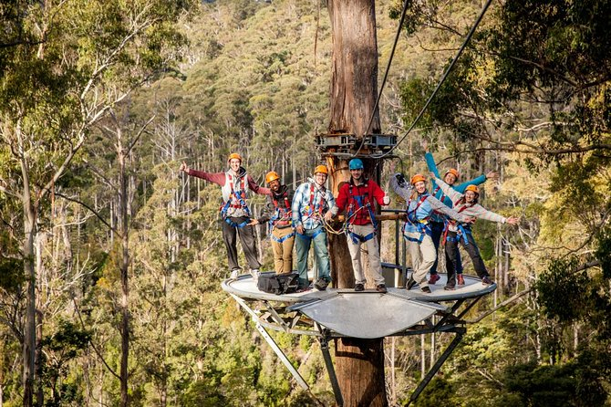 Hollybank Wilderness Adventure - Zipline Tours