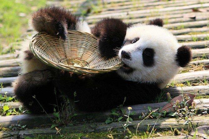 Volunteer Day at Dujiangyan Panda Base