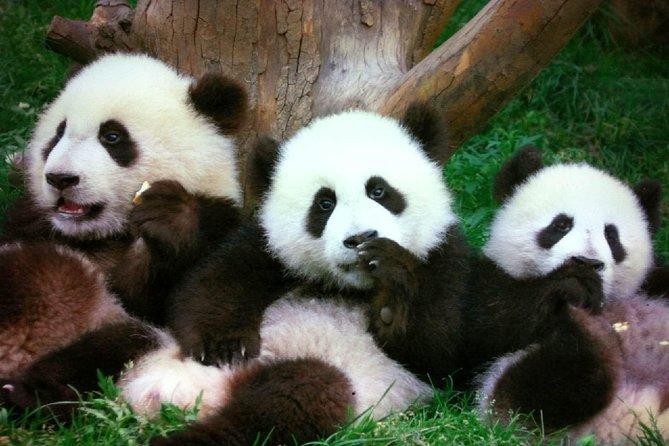 Tour della famiglia di Pechino: panda, calligrafia, hutong e aquiloni