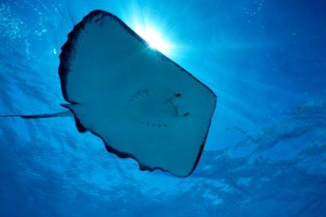 Gibbs Cay Stingray en Snorkel Adventure in Grand Turk