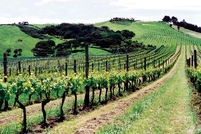 Waiheke Island Wine Tasting Tour from Auckland