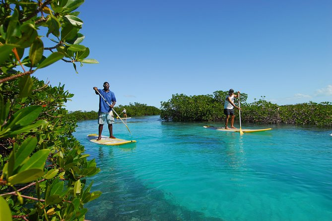 Stand Up Paddleboard Eco tour