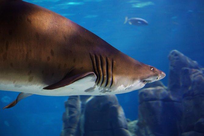 Biglietto d'ingresso all'acquario Sunshine Coast di SEA LIFE con Shark Dive Xtreme