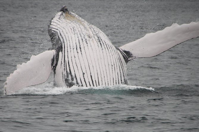 Grand Turk: Private Whale Watching Charter