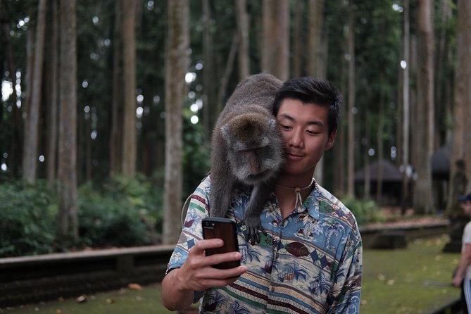 Ubud Tour : Include Monkey Forest And Rice Terrace