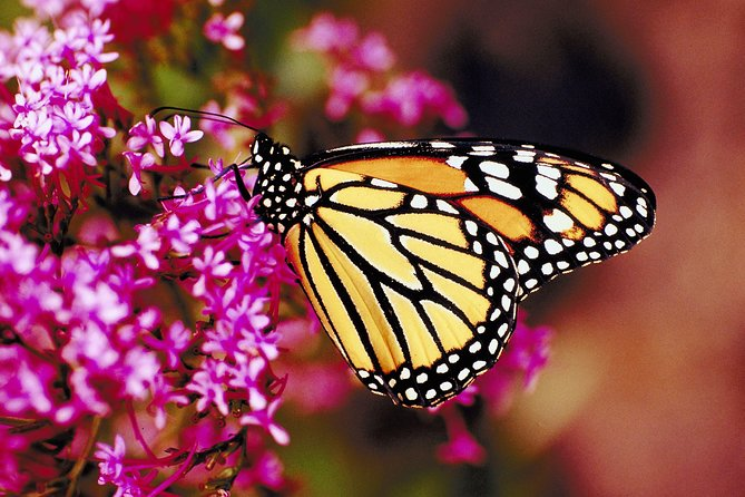 Rhodes Private Tour: Butterflies Valley