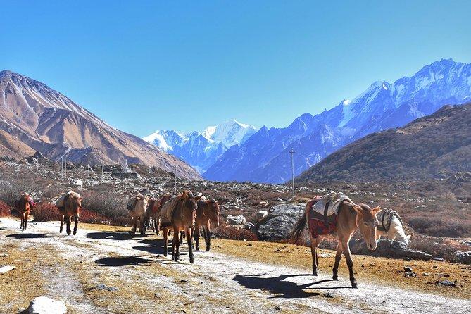 6 Nights amazing Langtang Valley Trekking