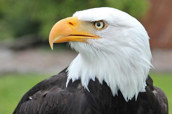 Premium Sitka Scenic Tour: Alaska Raptor Center, Fortress of the Bears,Totems!