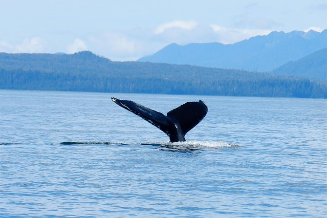 Private Sitka Whale-Watching and Marine Life Tour