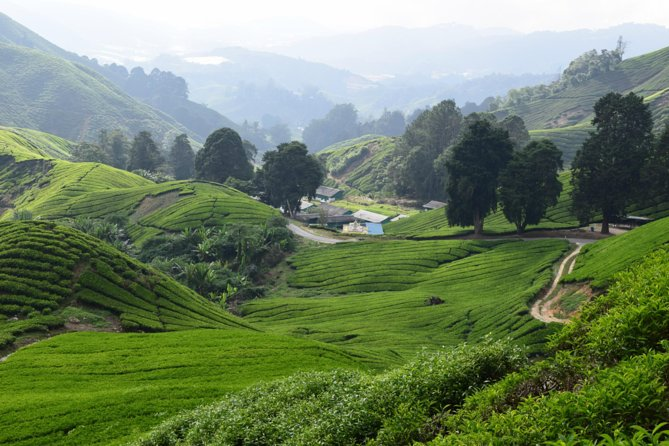 Cameron Highlands, Garden of Nature Full Day Tour + Steamboat Lunch