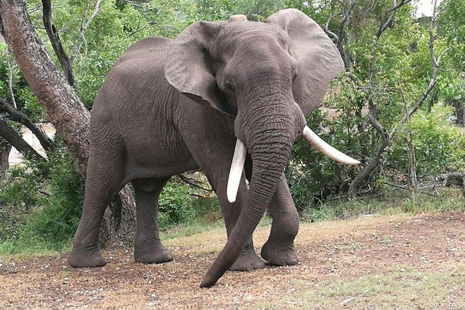 Zimbabwe Wildlife Safari Tour 12 Days