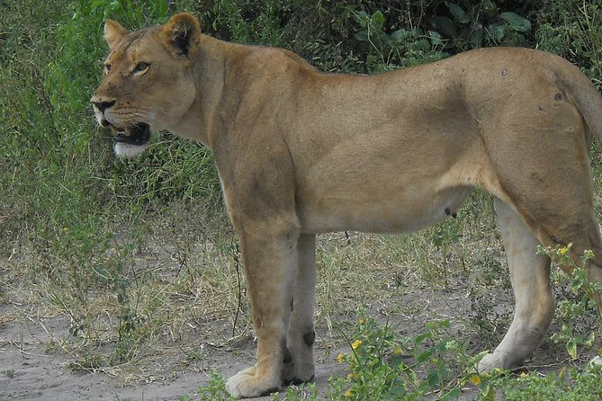 Hwange and Matopo National Park 5 nights Safari Tour