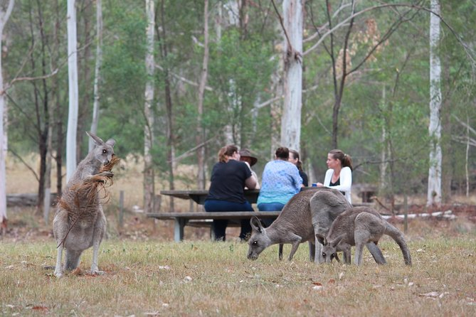 Blue Mountains day tour includes our popular breakfast in the Aussie bush