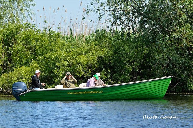 Guided Birdwatching day trip to the Danube Delta - private program