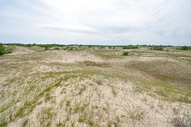 Letea sand dunes
