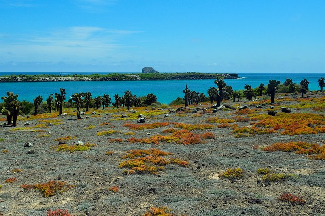 Day Trip to South Plaza Island from Puerto Ayora