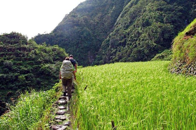 Cambulo rice paddies