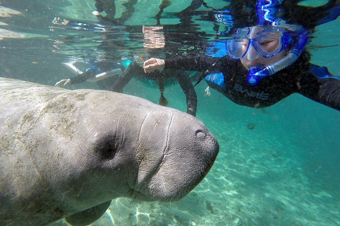 Swim with Manatee Adventure!