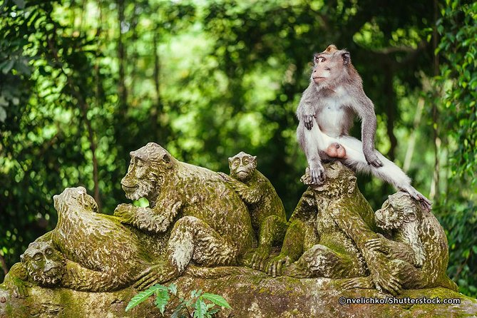 Bali Monkey Forest, Mengwi Temple, and Tanah Lot Afternoon Tour photo 11