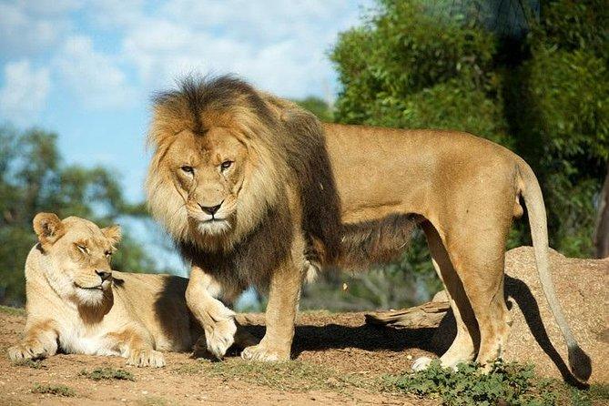 Werribee Open Range Zoo General Admission Ticket